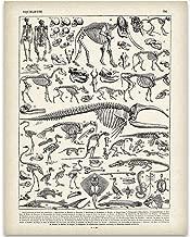 Animal Skeletons Illustration - 11x14 Unframed Art Print - Biology Lab Decor