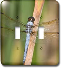 Best yellow sided skimmer Reviews