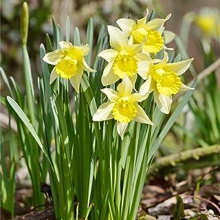 Comprar bulbos de primavera online