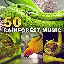 50 Rainforest Music: Tropical Sounds of Nature, Peace of Mind, Deep Meditation, Better Sleep, Zen Relaxation (Exotic Birds, Frogs, Rain, Crickets, River, Wind)