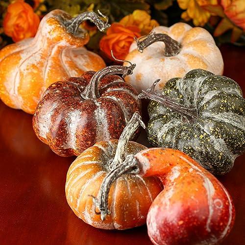Gourds And Pumpkins Amazon Com