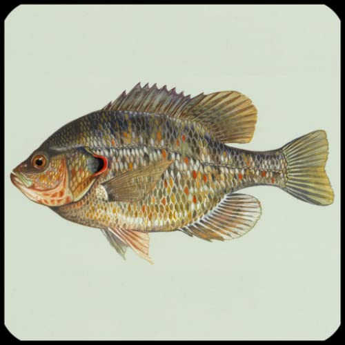 Especies de peces Trivia Quiz