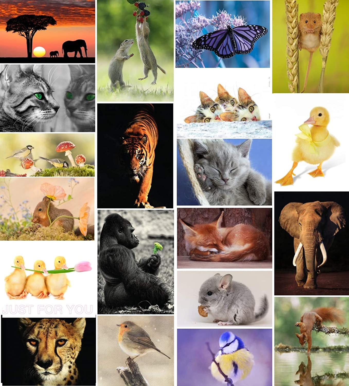 20 Discount is also underway Manufacturer OFFicial shop Animal Mix Postcards - Individual Unique Pictures and