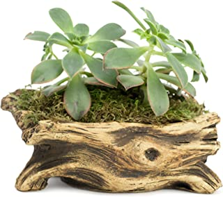 Natural Elements Log Planter (Branch) – Realistic Woodland-Themed with Intricate Weathered bark Detail. Grow Small Succulents, Cactus, African Violets. Striking in Any décor.