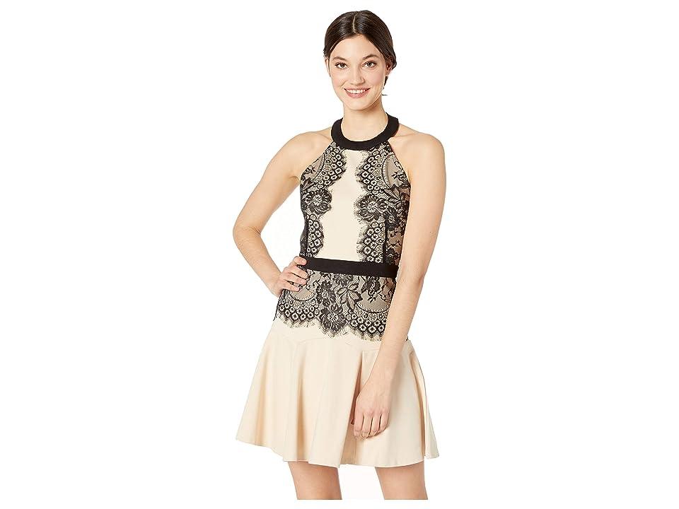 Bebe Halter Lace Pencil Dress (Black/Nude) Women