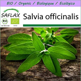 SAFLAX - Ecológico - Salvia - 60 semillas - Salvia