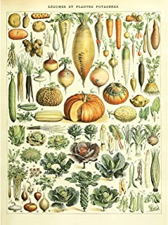 Meishe Art Vintage Poster Print Vegetables Collection Reference Chart Species Carrot Pumpkin Turnip Potato Kitchen Restaurant Dining Room Wall Decor (20.47'' x 27.56'')