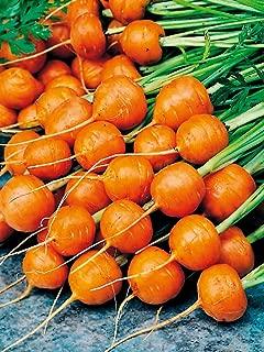paris market carrot