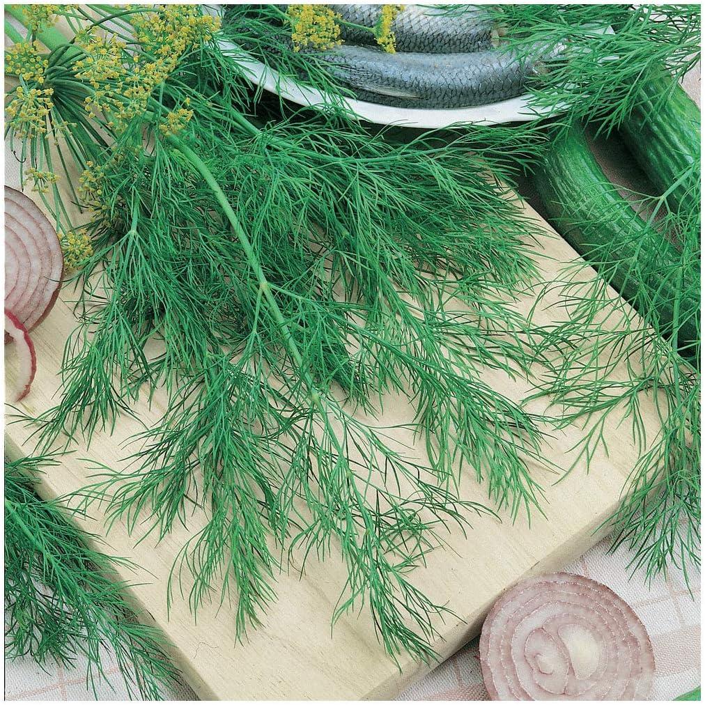 Everwilde Farms Houston Mall - 1 Lb Organic Herb Gold Va Seeds Bouquet Dill List price