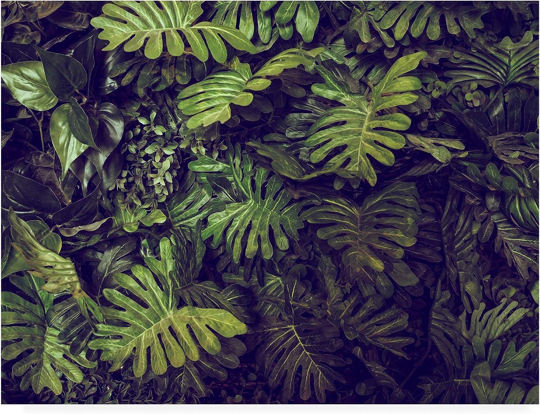 Trademark Topics on TV Max 84% OFF Fine Art Tropical 4 18x24 Studio by PhotoINC