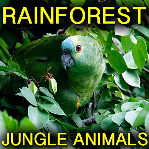 Rainforest Jungle Animals By Nature Sounds Relax On Amazon Music