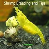 Shrimp Breeding and Tips