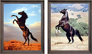 Wild Black Stallion Horse Rearing Animal Two Set Barnwood Framed 8x10 Picture Wall Decor Art Print Posters