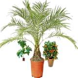 Flores (plantas exóticas)