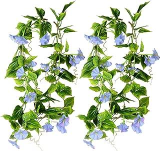 large morning glory flowers