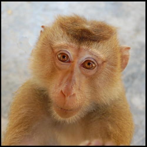 Affen Arten Trivia Quiz
