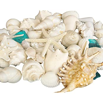 Amazon Com Real Seashells With Bright Sea Glass Home Decor Wedding Centerpiece Christmas Crafts Kitchen Dining