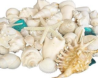 كأس المنزل الأصداف البحرية البيضاء مع زجاج البحر - ديكور المنزل زفاف فاخر مزيج قشرة البحر ، عيد الميلاد أو الحرف - أكثر من...