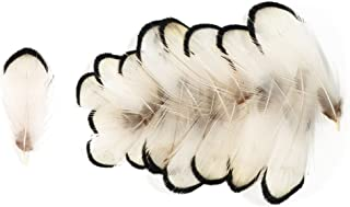 Lady Amherst Pheasant Neck Feathers (20 Pieces), Ivory and Black Tips (Small)