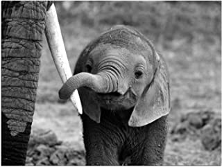 JP London Solvent Free Print PAPXS1X771686 Close Baby Elephant Mom Love Family Ready to Frame Poster Wall Art 8
