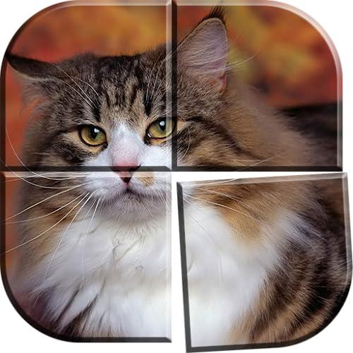 Katzen Puzzle Spiele Kostenlos