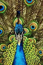 Peacock Lovers 2020 Weekly Monthly Planner: With Agenda & Appointments Calendar Schedule, To Do List, Notes & Gratitude   Peacock Lover Gifts For Men ... bird in Plumage Ritual to attract Mate