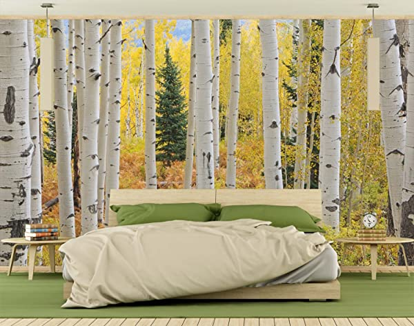 Wall Mural On Self Adhesive Wallpaper Photo Of Aspen White Birch Forest Elk Mountains Colorado HD DIY 3D Removable Reusable Don T Be Fooled By Cheaper Versions 12 Feet Wide By 8 Feet High