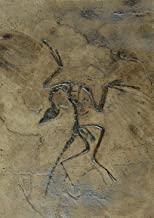 Archaeopteryx Dino Bird Fossil Replica in Museum Quality; Animal Fossils, imprint gift skeleton tile tiles