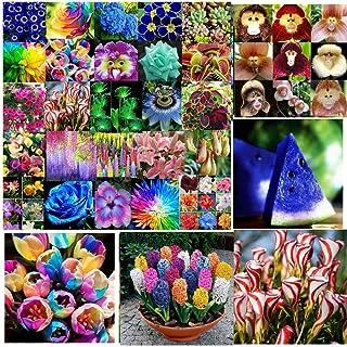 紫カタバミ種子10個入り:アジサイオーキッド理想の庭鉢植えの種レア花植物観賞用各種