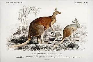 Bilderwelten Pizarra magnética - Vintage Board Kangaroo 60x90cm