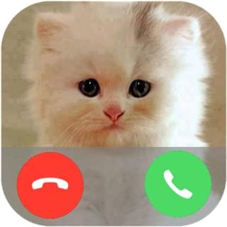 Best cat mario 3d world Reviews