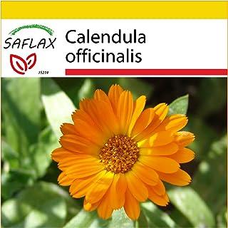 Calendula officinalis fl.pl Ringelblumen Modefarben Mischung 1kg