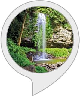 Ambient Sounds: Rainforest Sounds II