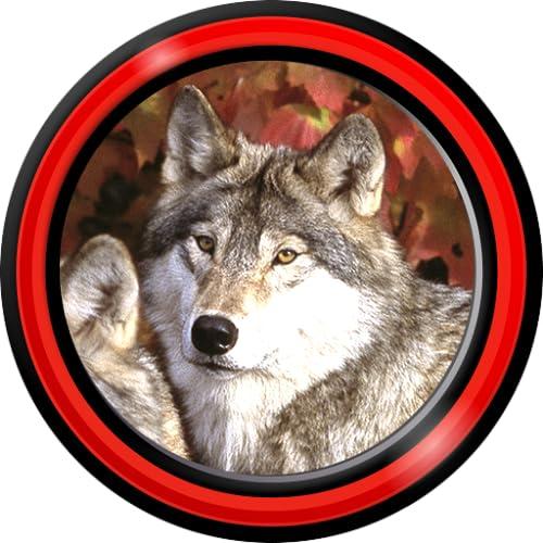 Wolf Live Hintergrundbilder