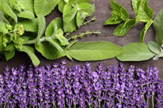 LAVENDER SAGE TYPE FRAGRANCE OIL - 8 OZ - FOR CANDLE & SOAP MAKING BY FRAGRANCEBUDDY - FREE S&H IN USA