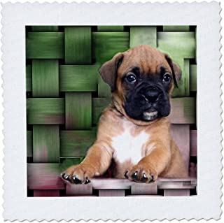 3dRose Brindle Boxer Puppy - Quilt Square, 8 by 8-Inch (qs_4142_3)