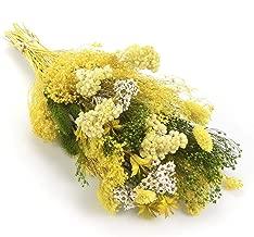 Sanremo fleurs s/éch/ées de la Riviera dei Fiori .Italie Bouquet-Fantasy vert