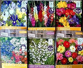 Portal Cool 50 pegatina de Paquete: asstd Hermosa Flores del jardín de los bulbos de primavera y verano perenne Paquete de calidad de la planta
