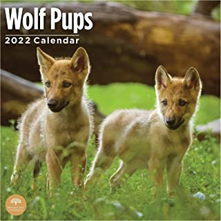 2022 Wolf Pups Wall Calendar by Bright Day, 12 x 12 Inch, Cute Wild Ainimals Wolves