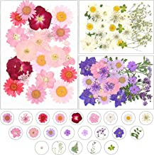 Dreamtop 85pcs Natural Dried Pressed Flowers Mixed Multiple Dried Flower Leaves Petals for DIY Candle Resin Jewelry Nail P...