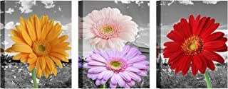 African Daisy Wall Art for Living Room Canvas Decor Painting White and Black Chrysanthemum Pictures Print Artwork (12x16inch x 3Pieces)