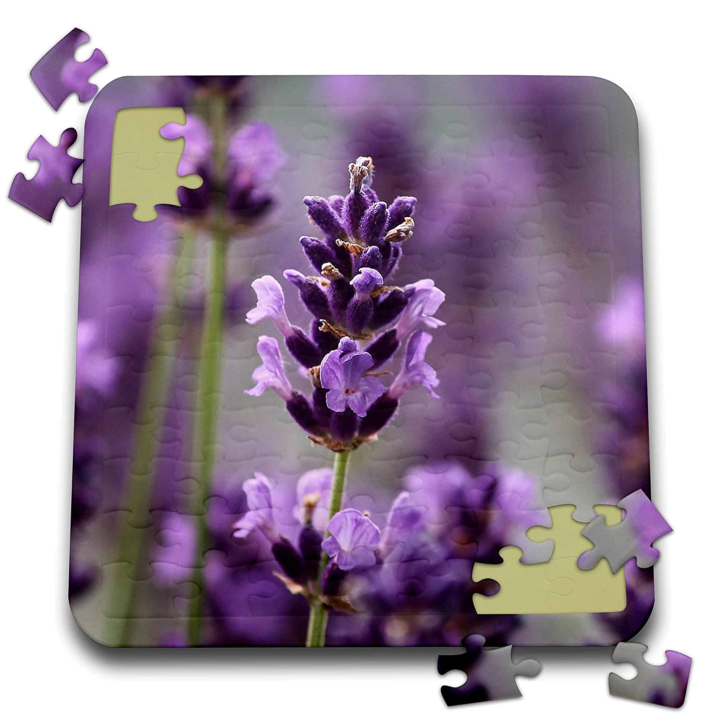 3dRose Sven Herkenrath Nature - Photography of Lavender Wonderful Purple Flower Blossom - 10x10 Inch Puzzle (pzl_306692_2)