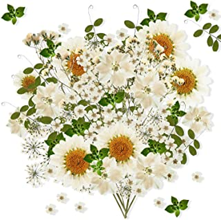 Nuanchu 81 Pieces Real Dried Pressed Flowers Leaves, Flower Field Series, Daisies, Larkspur, Gypsophila, Natural Pressed F...
