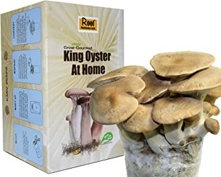 Root Mushroom Farm- King Oyster Mushroom Growing kit-New Launched