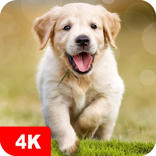 Dog Wallpapers & Cute Puppy Backgrounds apps