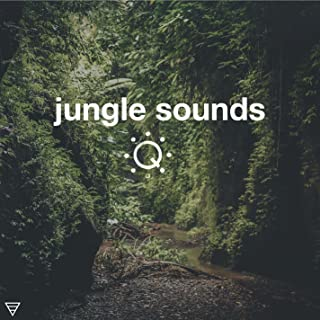 Queue Ambient Sounds for Sleep, Meditation, Background and More: Jungle Sounds