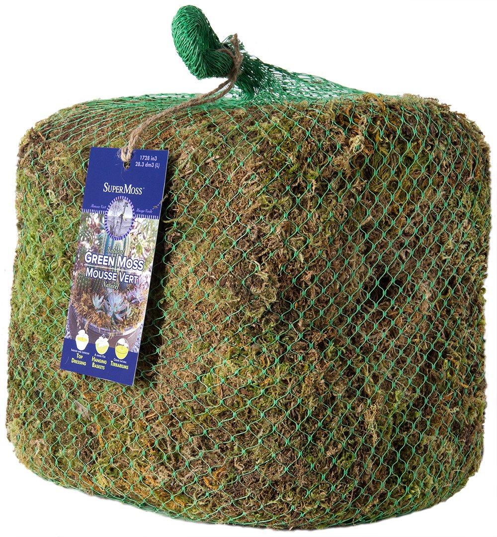 SuperMoss 22168 Sheet Moss Mini Preserved 10lbs Fresh Green Shredded