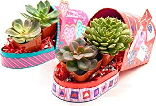 Succulent Bracelet,Succulent Jewelry,Birthday gift,Valentine\u2019s day gift,Gift for her,Plant Jewelry,Plant Mom,Stacker,Stacking Bracelet