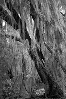 Black and White Photography Art Print - Picture of Spanish Moss in Tree in Southern Louisiana Swamp Nature Decor 5x7 to 40x60