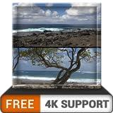 無料のビーチツリーキャンプHD-HDR 4K TV、8K TVの美しい景色を壁紙として、クリスマス休暇の装飾、調停と平和のテーマとしてお楽しみください